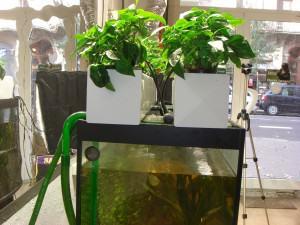 Système aquaponique de culture d'intérieur