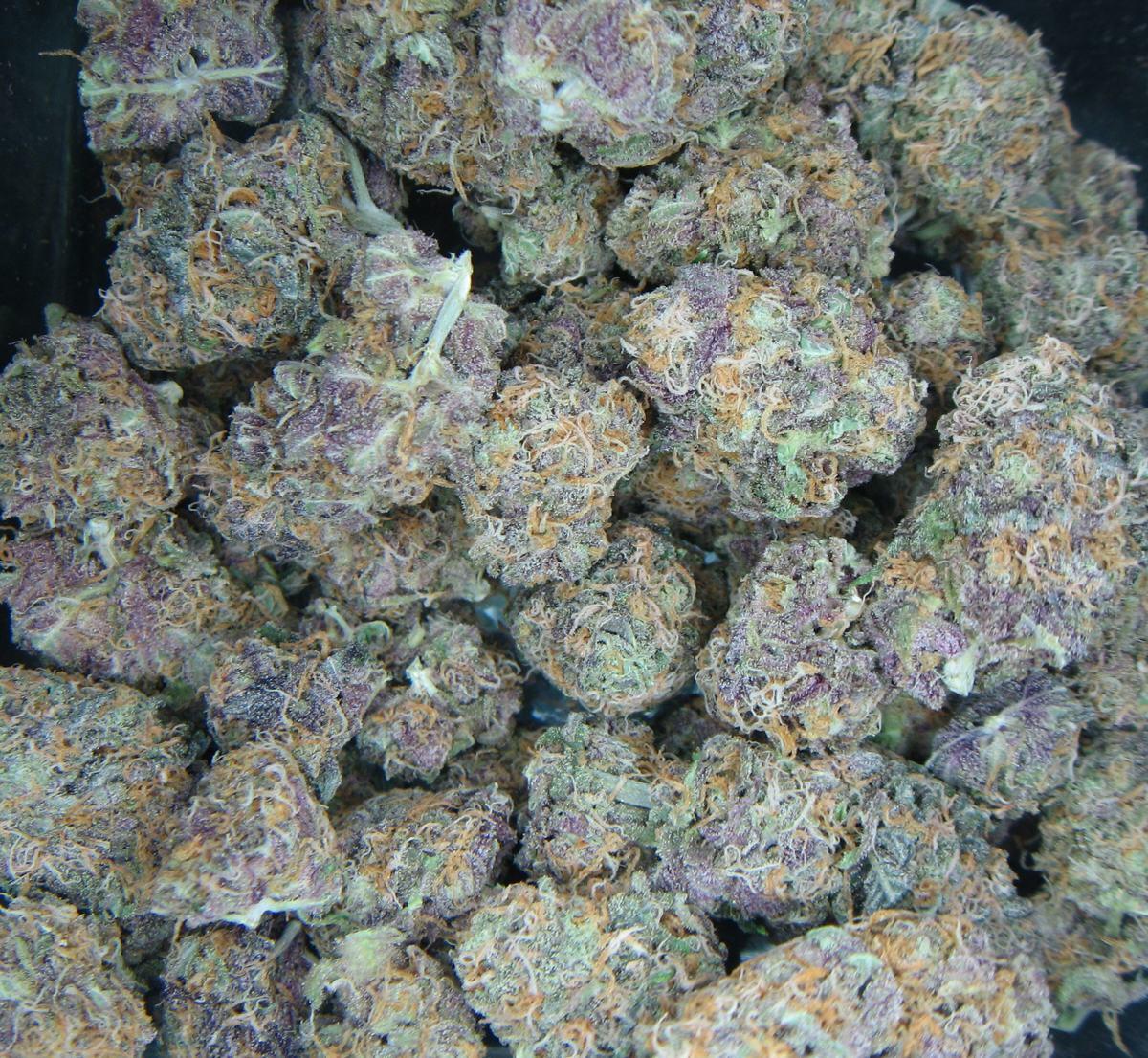 Les variétés à base d'OG Kush sont excellentes pour l'usage médical de la marijuana