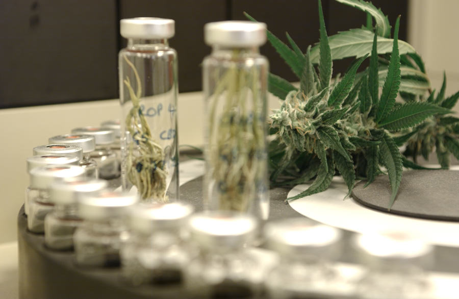 Laboratoire de production de médicaments à base de cannabis (source = GW Pharmaceuticals)