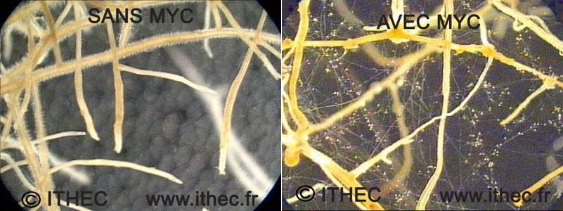 Vie microbienne bénéfique symbiotique