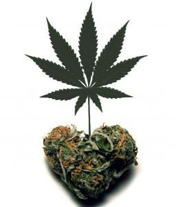 Le cannabis et l'amour