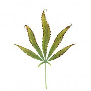 carence et exc s de potassium dans la culture de cannabis blog du growshop alchimia. Black Bedroom Furniture Sets. Home Design Ideas