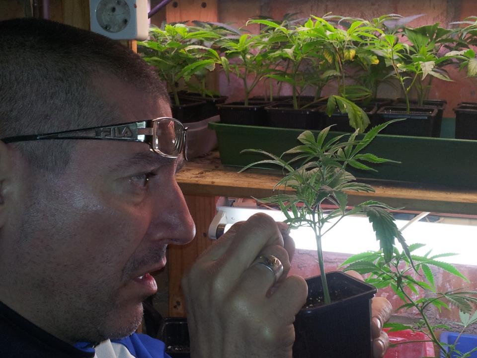 Carulo de BCN Seeds
