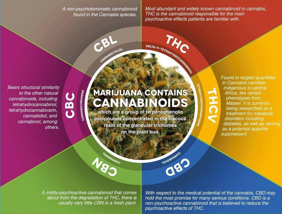 Les principaux cannabinoïdes du cannabis