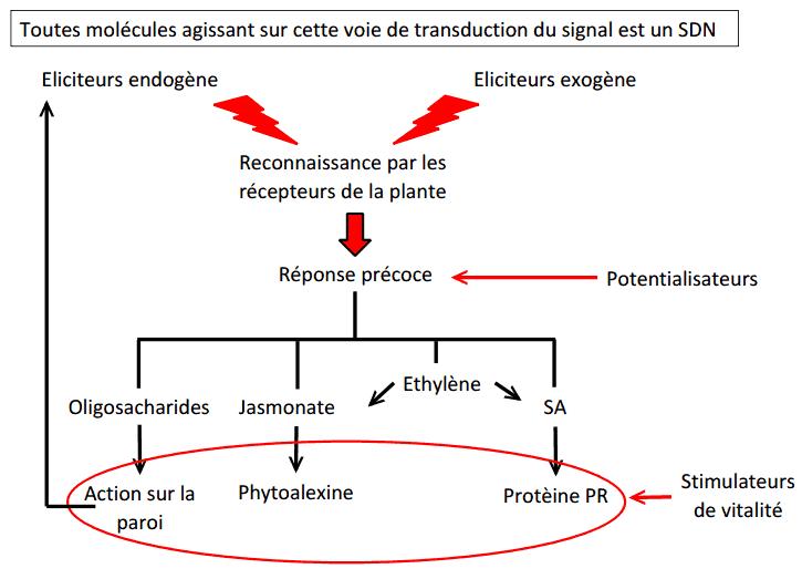 Stimulateurs de défenses naturels (SDN)