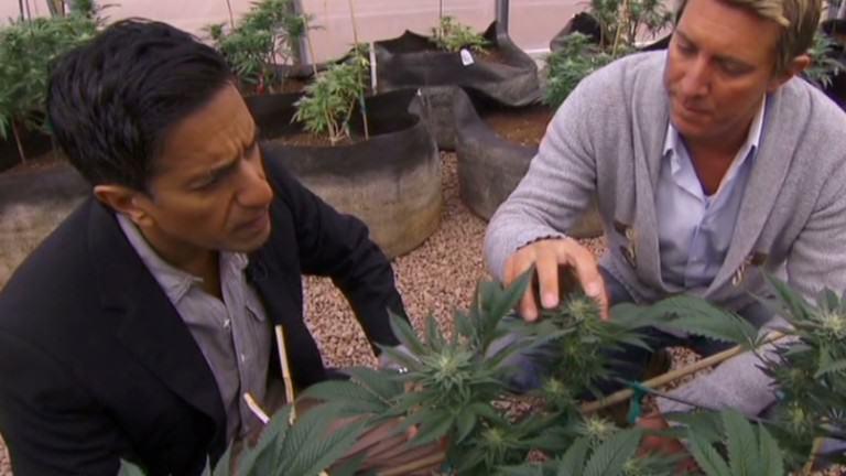 L'expert médical de la CNN avec un cultivateur de cannabis médical
