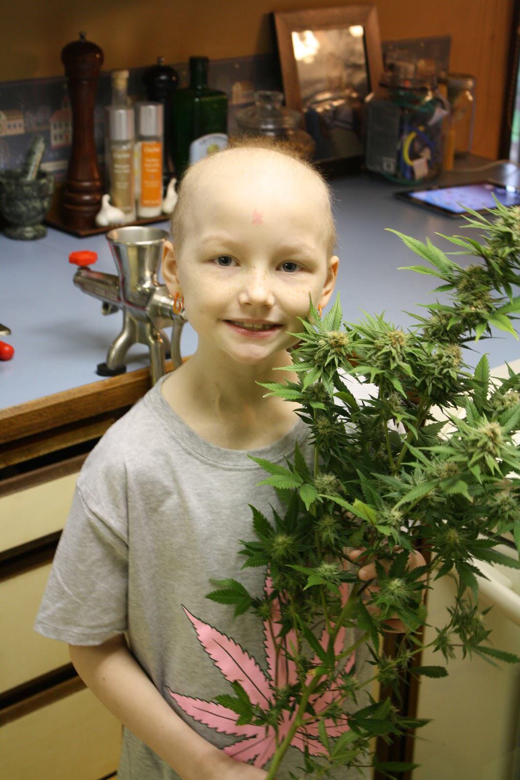 Actualités du cannabis médical, Novembre 2013