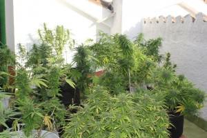 Un jardin varié est un plaisir à visiter