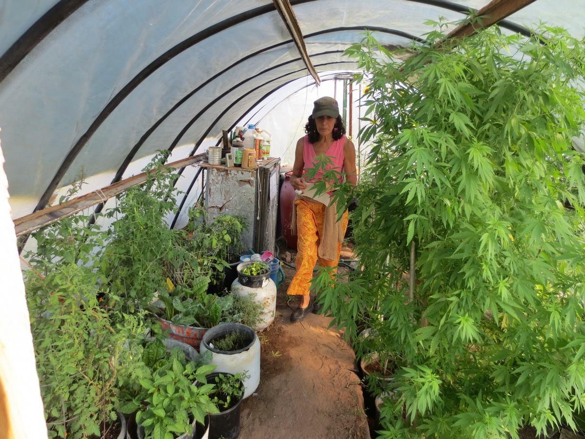 Cultivatrice de cannabis medicinal