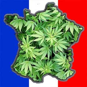 Le cannabis bientôt légalisé?