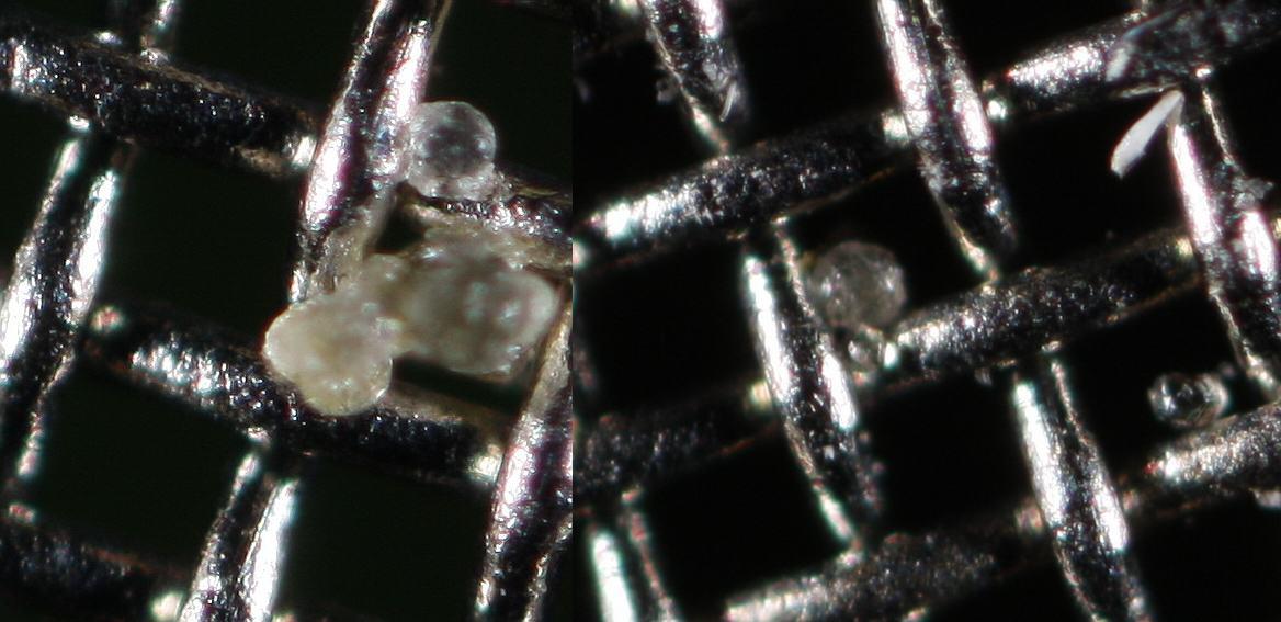 Les trichomes sont séparés de la matière végétale par le tamis (Bubbleman)