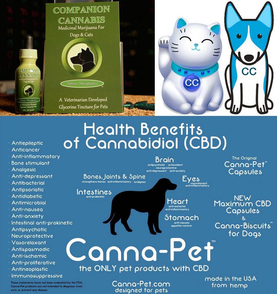 Cannabis médical pour animaux de compagnie
