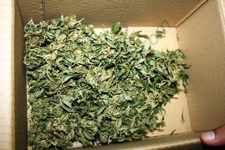 Comment faire du haschisch avec du co2 blog du growshop - Armoire pour faire pousser du cannabis ...