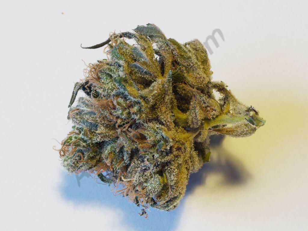 Echantillon de cannabis Chunk Norris prêt pour la dégustation