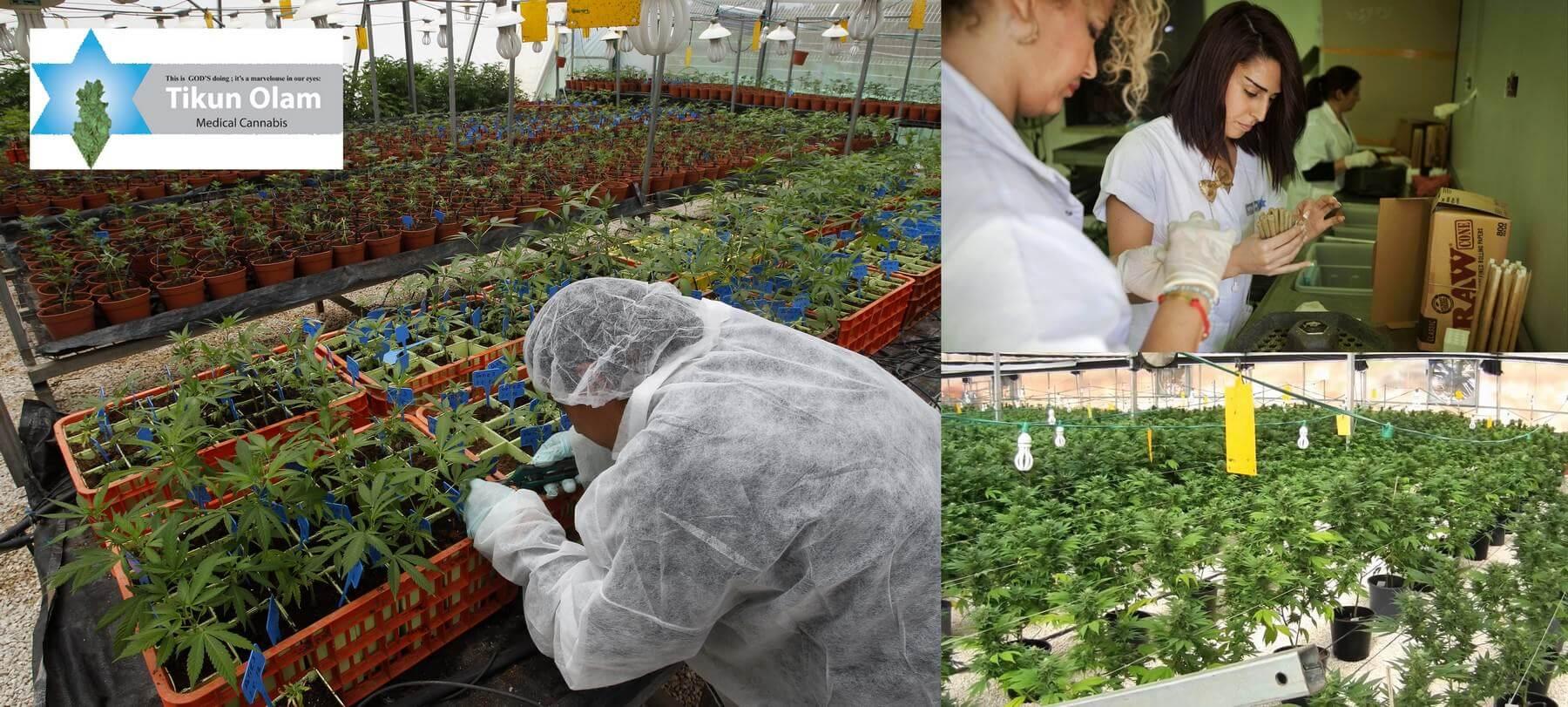 Actualités du cannabis médical, Décembre 2014