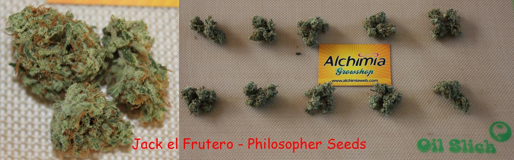 Jack el Frutero de Philosopher Seeds