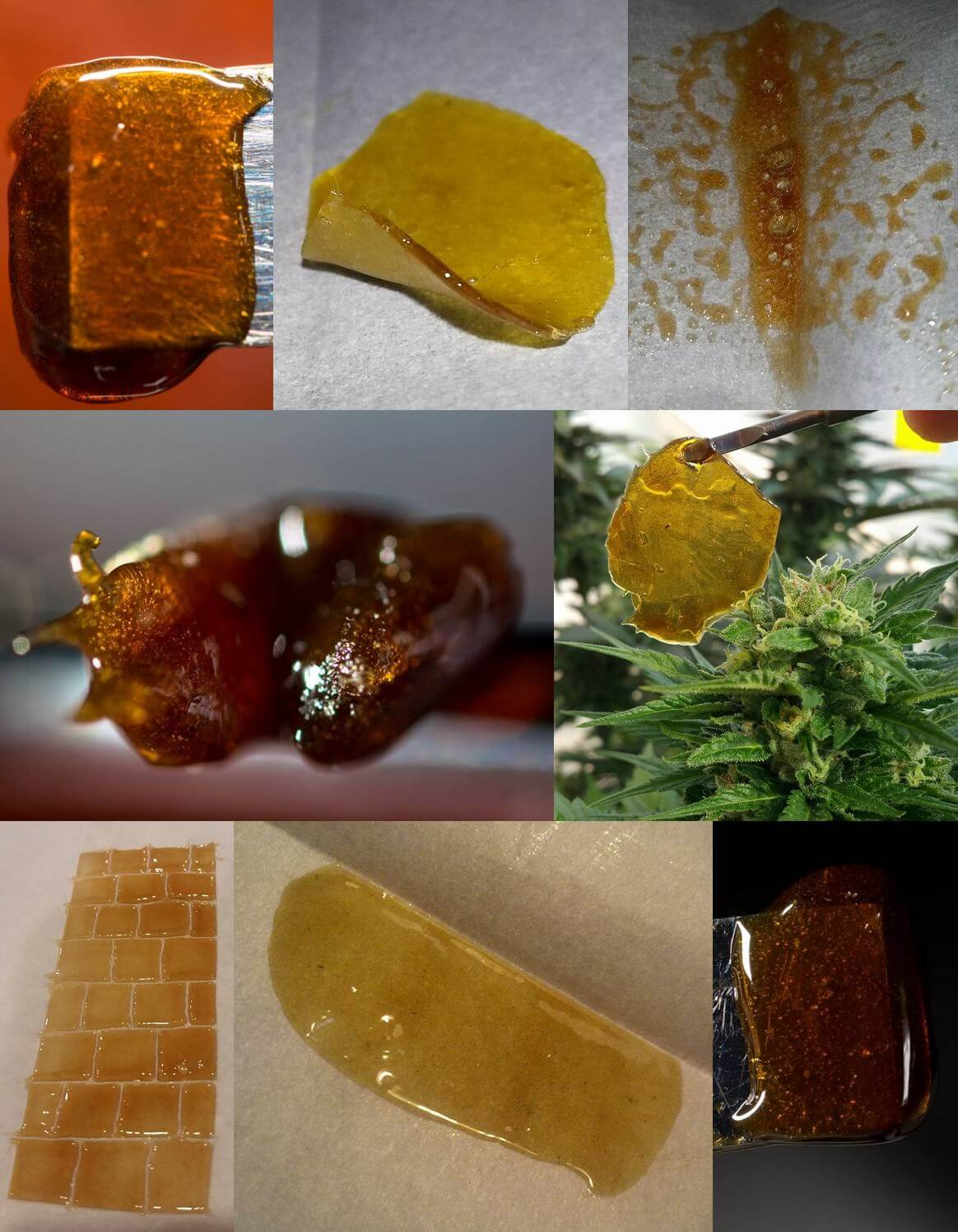 Extractions de cannabinoïdes Rosin Tech