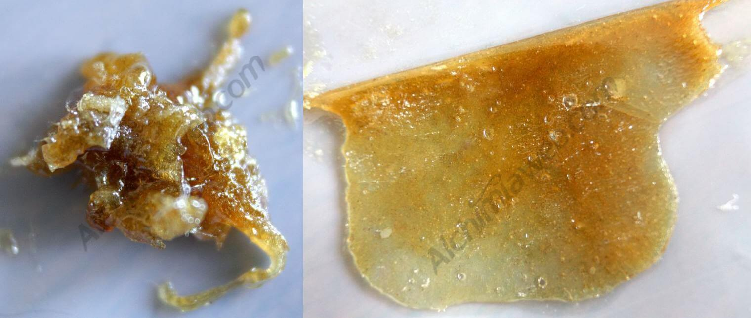Rosin Tech d'Amnesika 2.0 de Philosopher Seeds