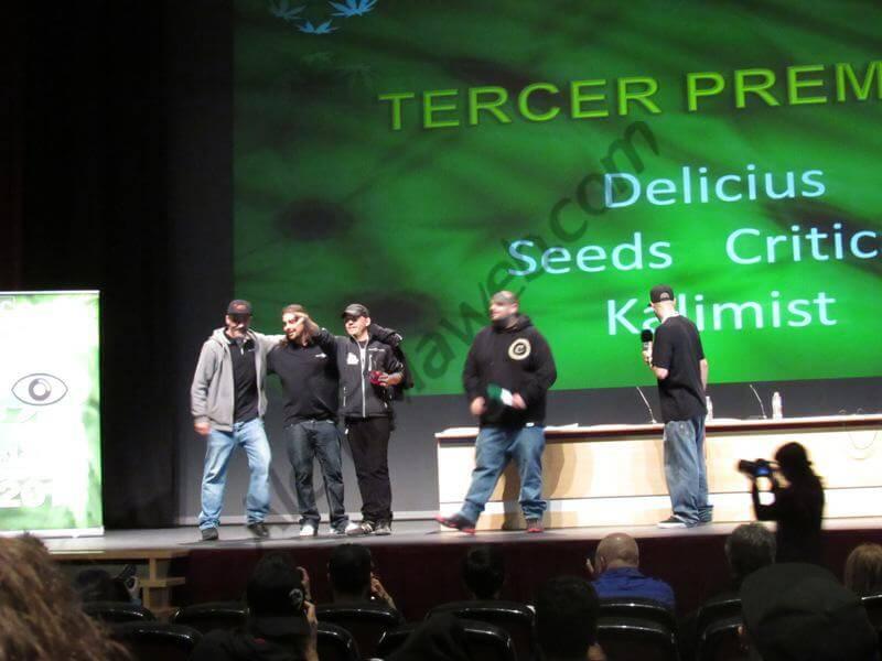 Delicious Seeds - Critical Kalimist