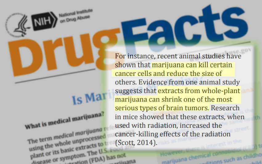 L'agence américaine NIDA contre les drogues, reconnaît le cannabis médical
