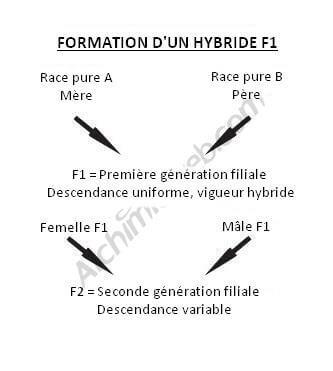 Création d'un croisement F1