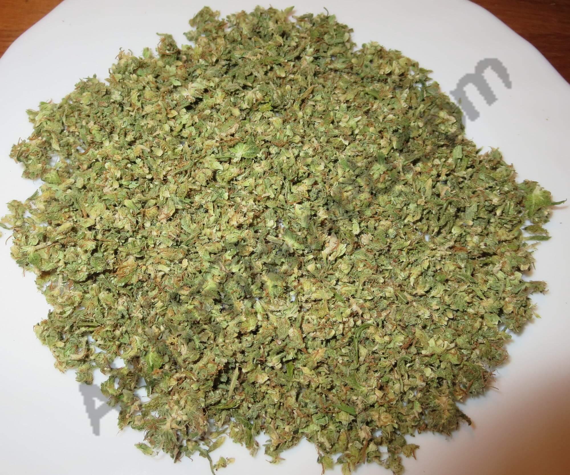 Comment faire ses capsules d 39 huile de cannabis blog du for Plantation cannabis interieur sans materiel