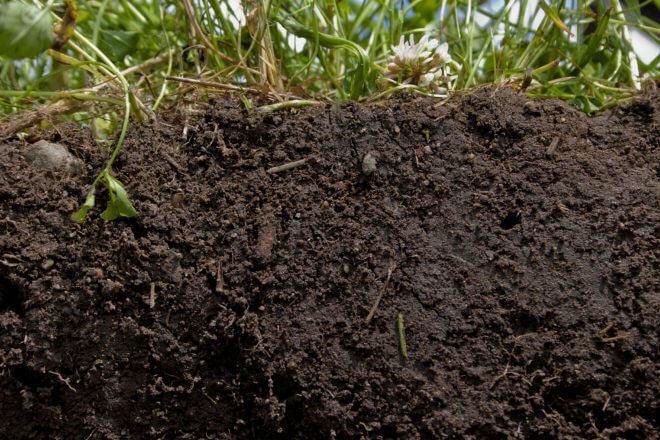 Les plantes ont besoin d'un sol vivant et riche pour se développer correctement (Photo : NRCS)
