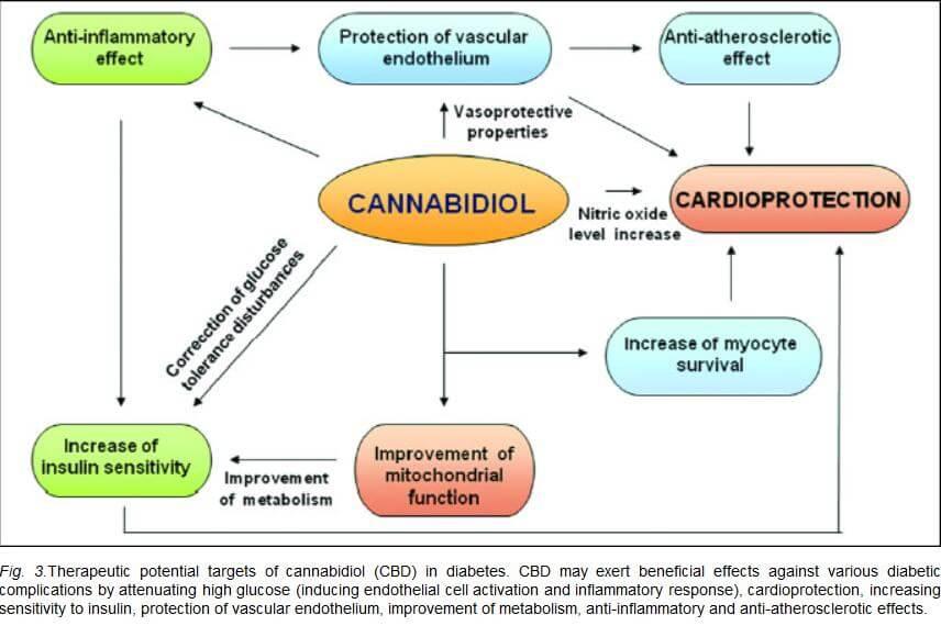 Action du CBD contre le diabète