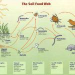 La chaîne alimentaire du sol