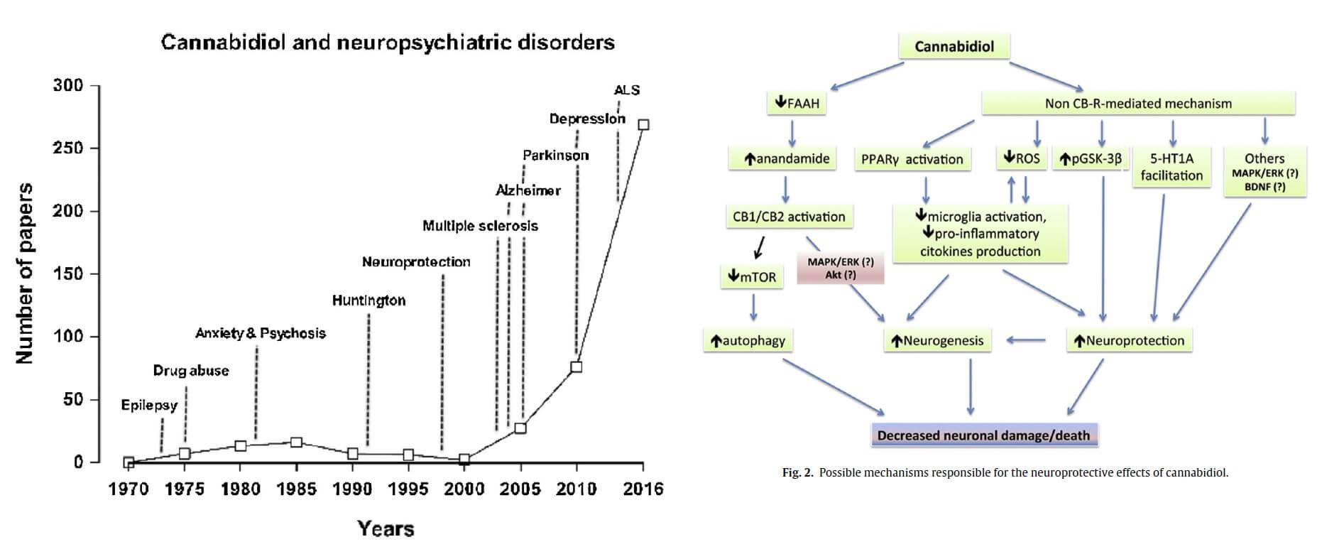 Du CBD contre les troubles neurologiques