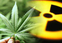 cannabis radiation