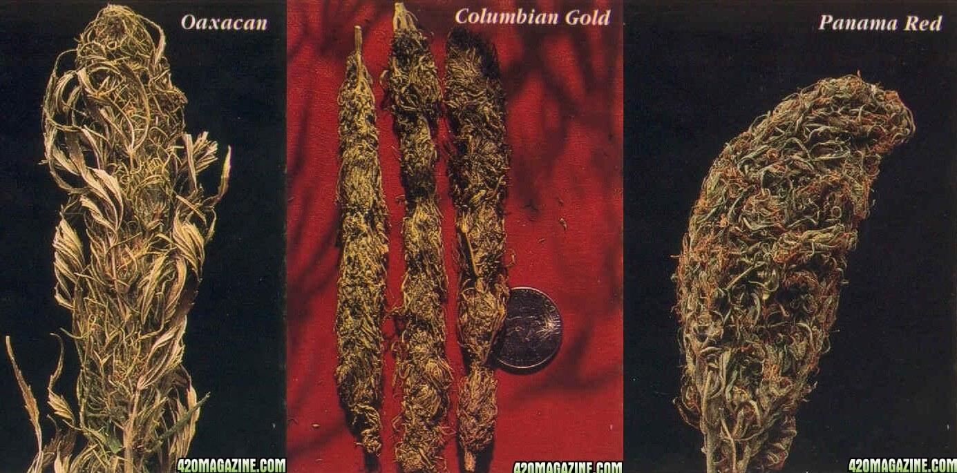 Échantillons de cannabis de cette époque : Mexican Oaxacan, Columbian Gold et Panama Red. (source : 420magazine.com)