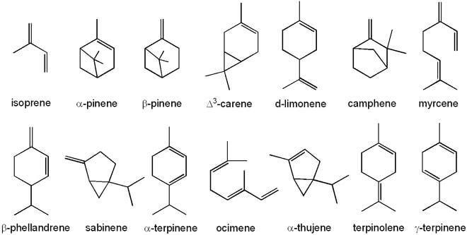 Certains des terpènes du cannabis