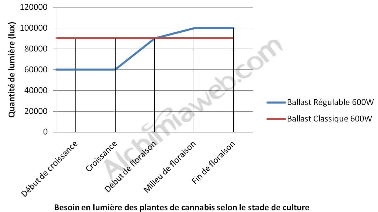 Production maximale de cannabis en int rieur blog du for Croissance cannabis interieur