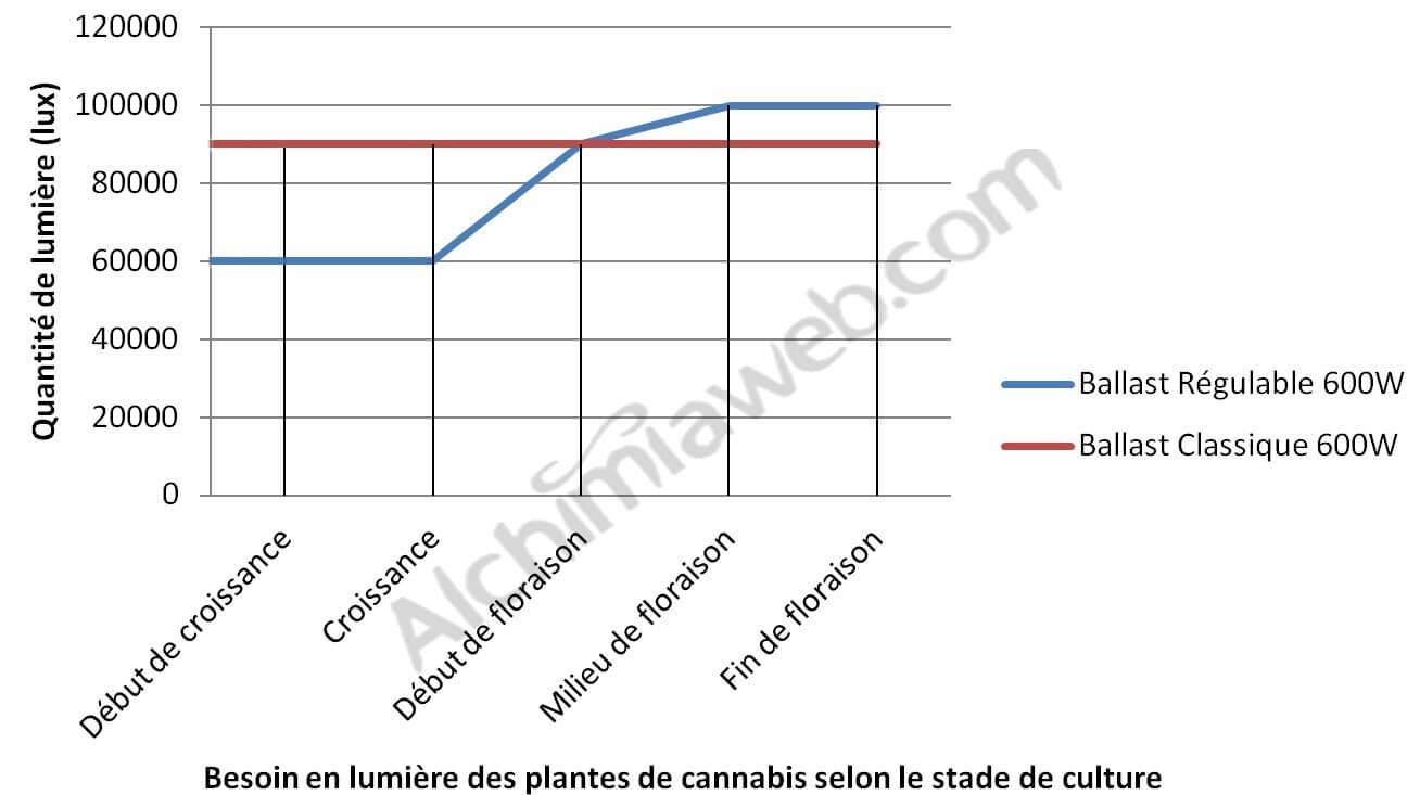 Besoins lumineux des plantes de cannabis
