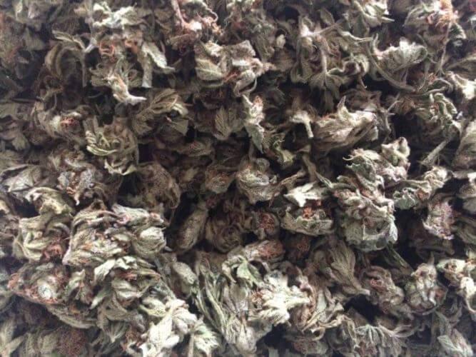 Fleurs de cannabis séchées et affinées