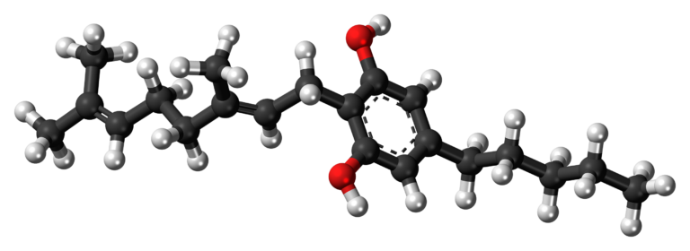 Cannabigérol (CBG): l'origine des cannabinoïdes