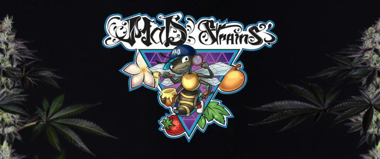 MaD Strains, l'abeille Hip Hop du cannabis