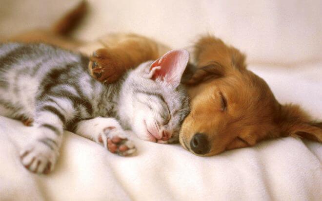 Nous devons offrir la meilleure qualité de vie possible à nos animaux domestiques
