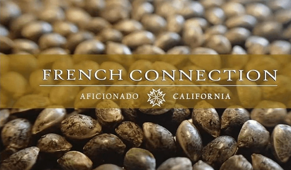 Aficionado French Connection, de la Californie vers l'Europe