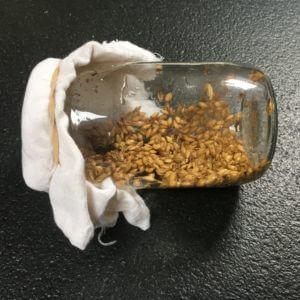 Après un minimum de 8 heures, nous filtrons les graines et nous les rinçons une nouvelle fois. Nous les mettons dans la carafe (humide), que nous recouvrons avec la gaze à fromage et l'élastique. Nous laissons la carafe en position horizontale.