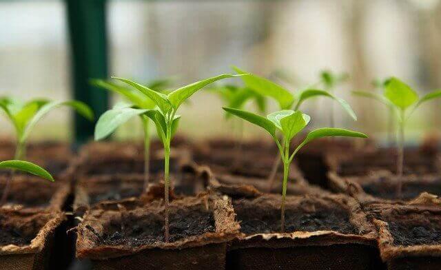 Astuces pour la germination des graines du potager