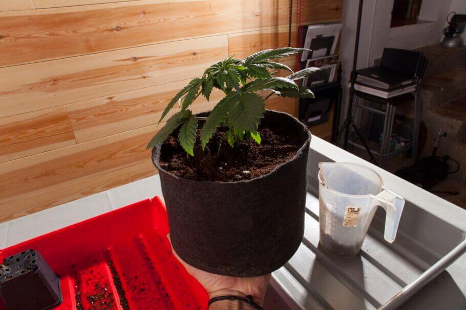 La plante est prête pour un bon arrosage!