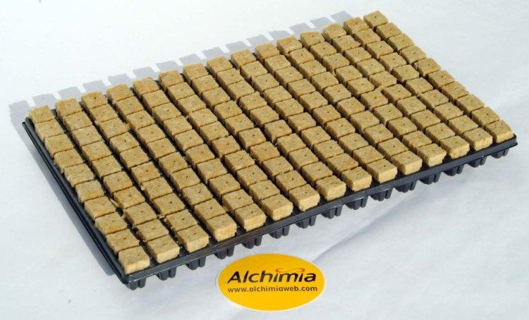semi d adenium et plumeria sur laine de roche - Page 2 Safata_150