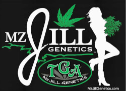 TGA Mz Jill Genetics