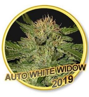 Auto White Widow - Mr Hide Seeds