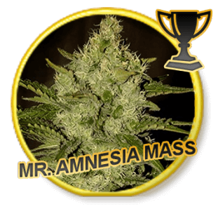 Mr. Amnesia Mass - Regular