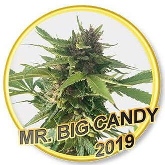 Mr Big Candy - Regular