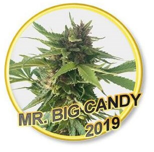 Mr Big Candy
