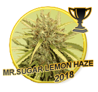 Mr Sugar Lemon Haze - Regular